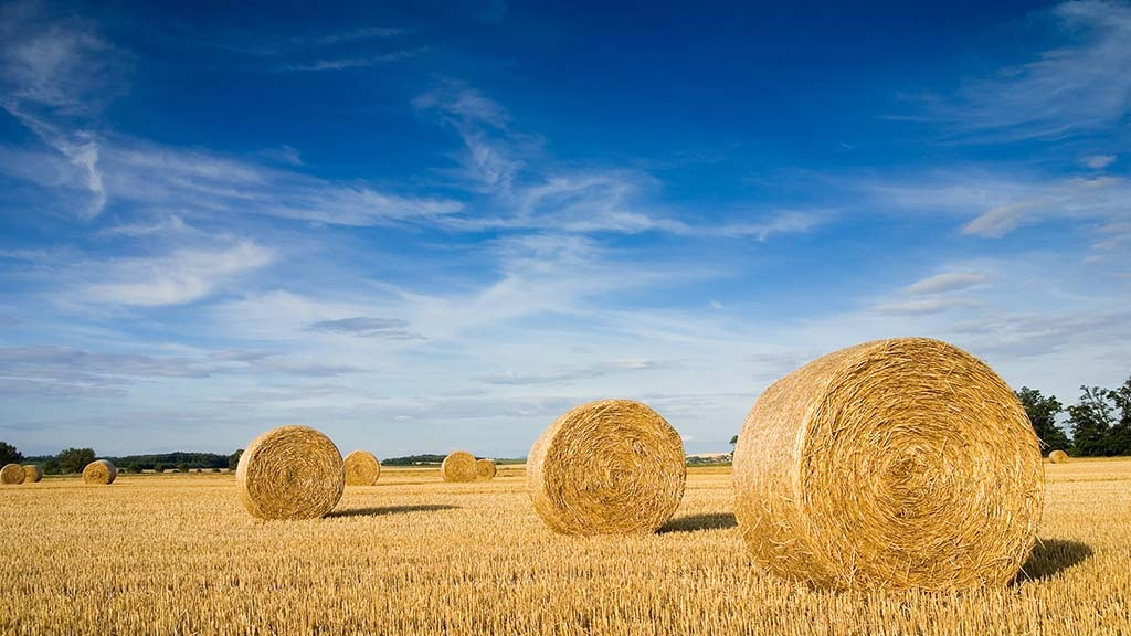 Straw prices rise on poor yields
