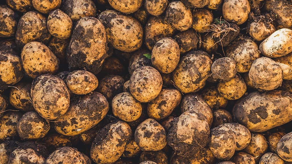 Confidence in potato market