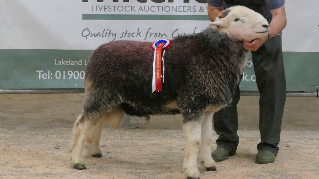 New Herdwick record of 18,000gns