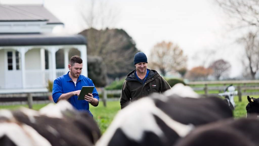 Remote control cattle becomes a commercial reality