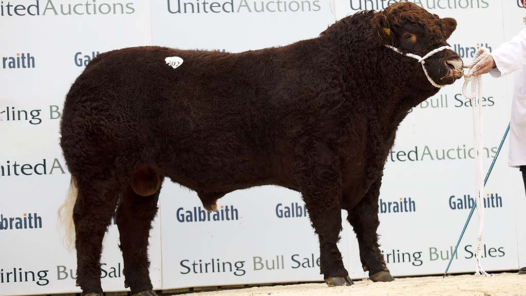 STIRLING BULL SALES: Salers top at 5,500gns