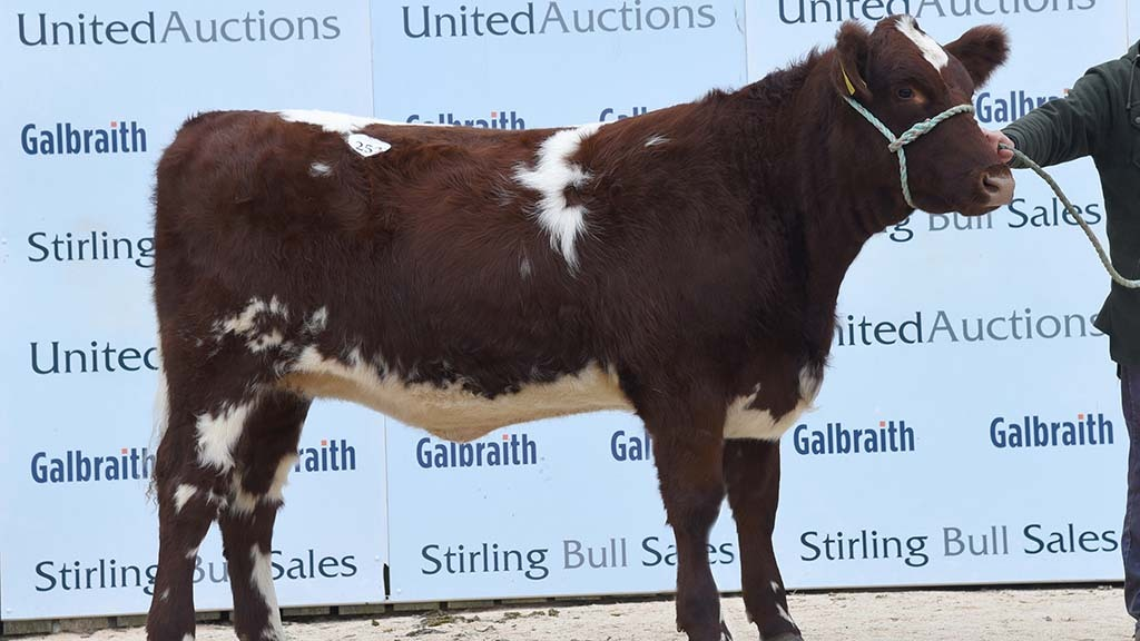 Glenisla Desiree N461, from Major J.P.O. Gibb, Blairgowrie, which sold for 7,800gns.