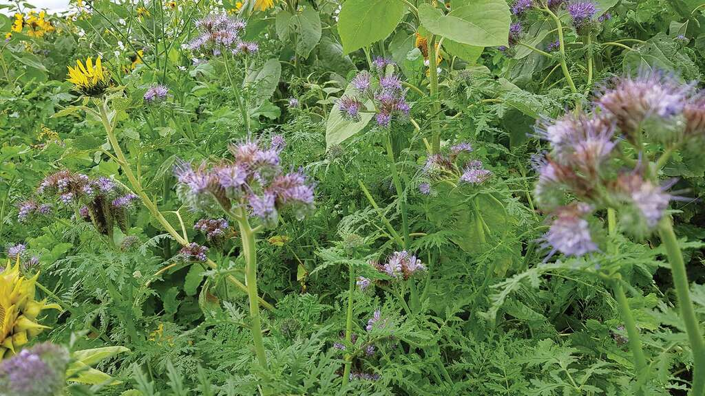 Midlands farmers can get funding to plant cover crops