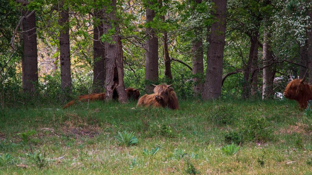Trees and livestock can be mutually beneficial