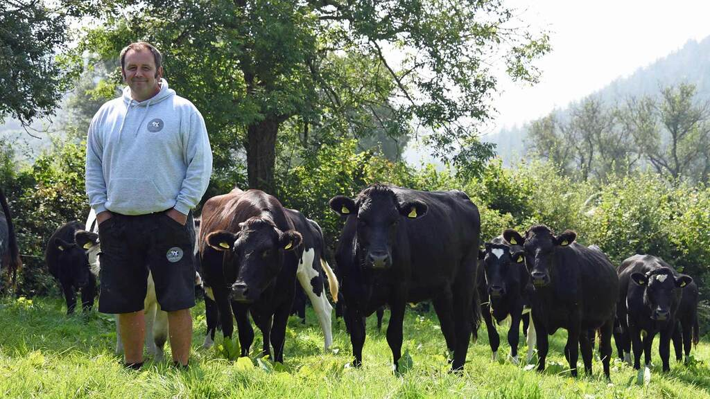 Farmer's heartbreak as bovine TB wipes out entire dairy herd