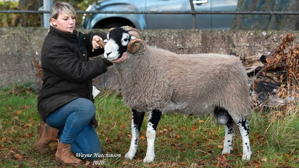High of £60,000 for Swaledale rams at Kirkby Stephen