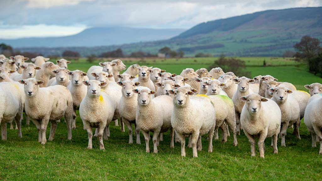 UK livestock farmers facing higher feed prices due to 'quirk' in tariff regime