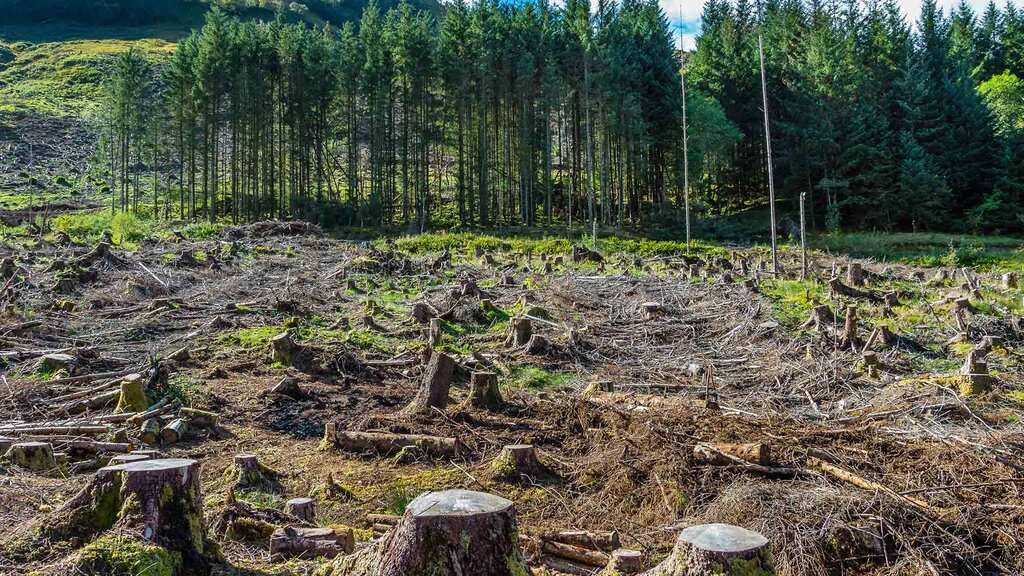 Green agenda causes forestry values to soar