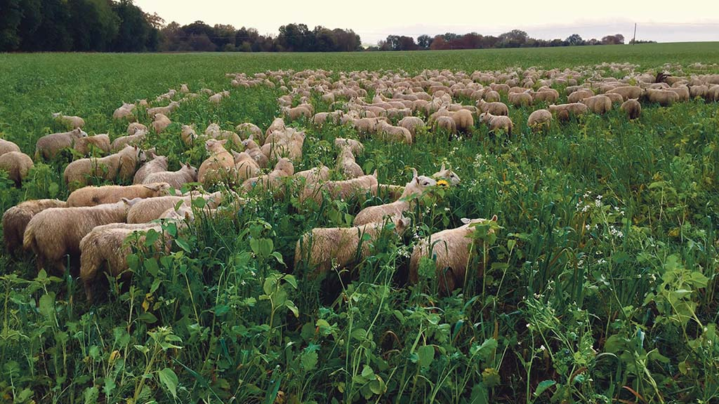 Groundswell 2021: How livestock can benefit an arable system