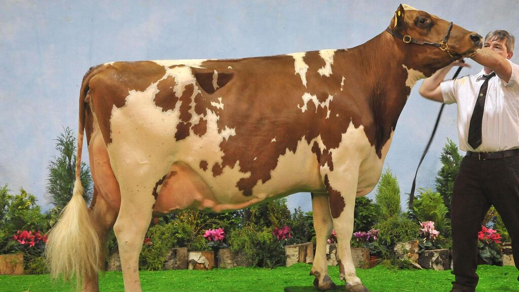 SUPER COW OF THE DECADE