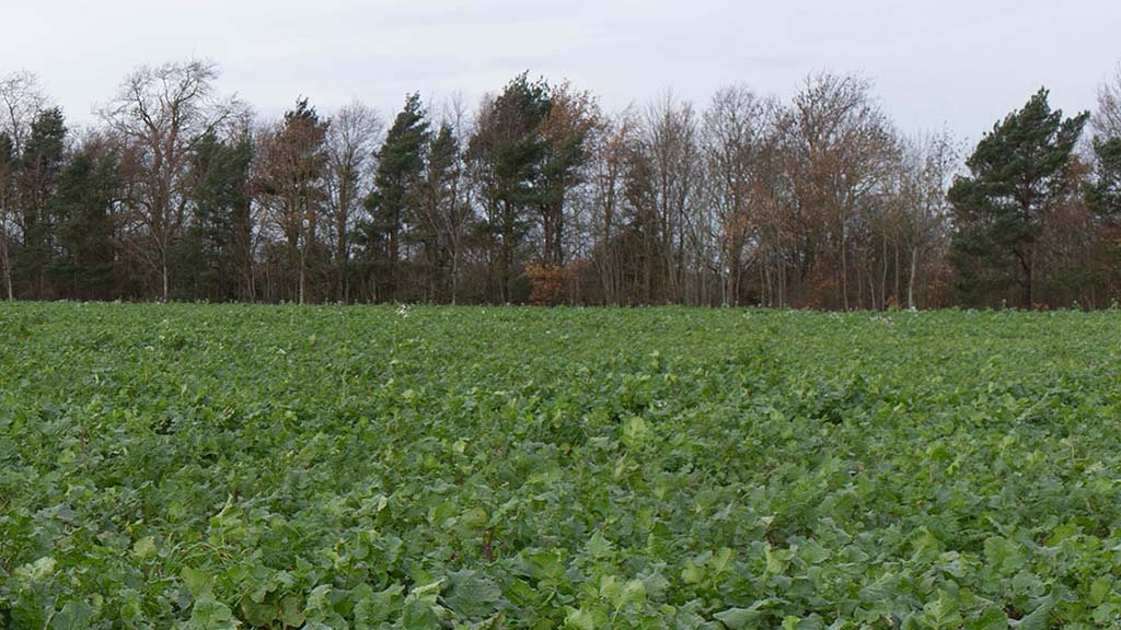 The use of cover crops has been trialled for the past six years.