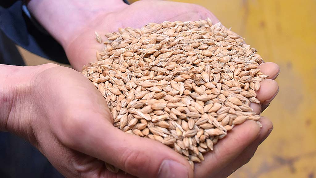 Top tips for safe and efficient grain sampling this harvest