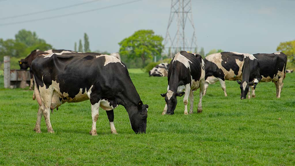 OFC21: Dairy farmers challenge the norm to achieve business growth