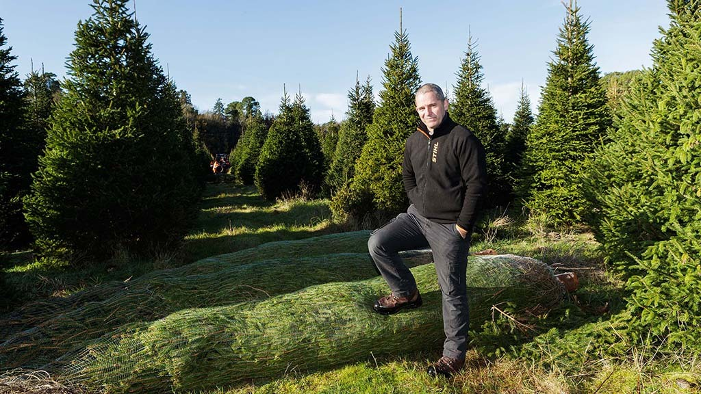 Pursuit of the perfect Christmas tree - What has changed?