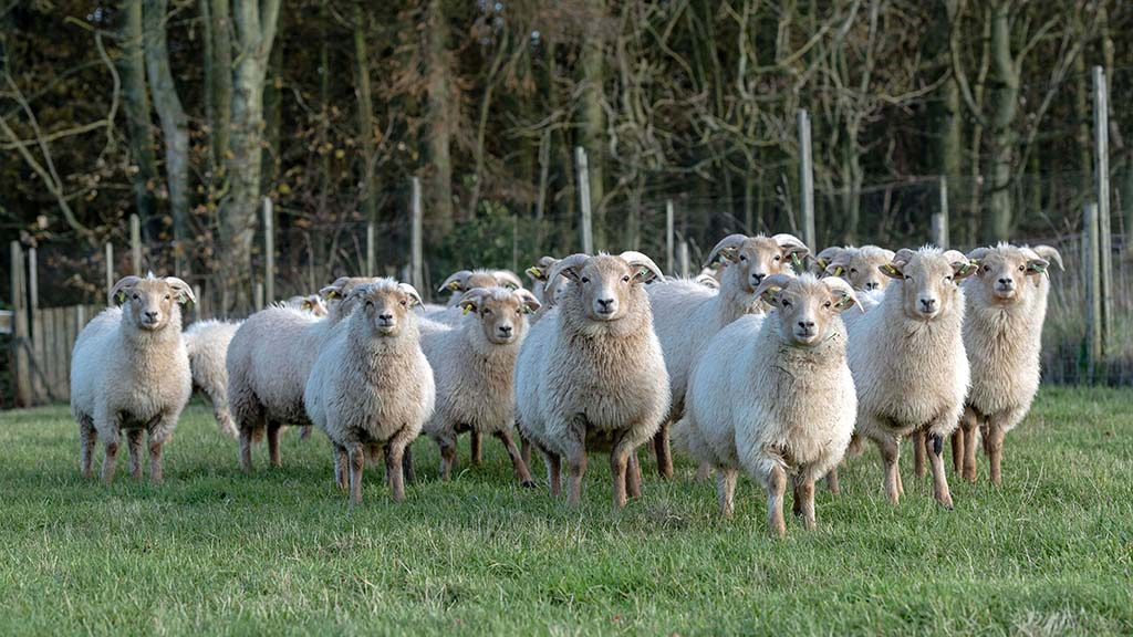 Rare breeds set to play key role in UK landscape