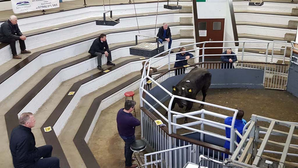 Pandemic highlights value of auction marts