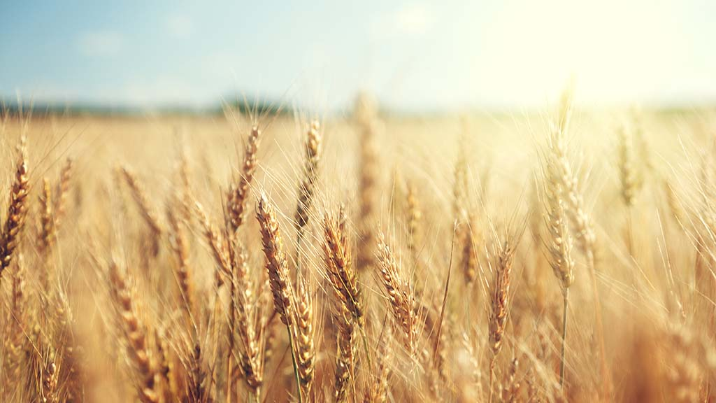 Strong start to the year in wheat markets