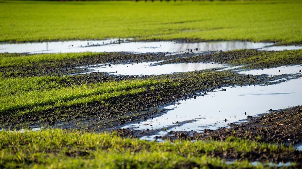 Saturated soils bring flooding heartache for growers