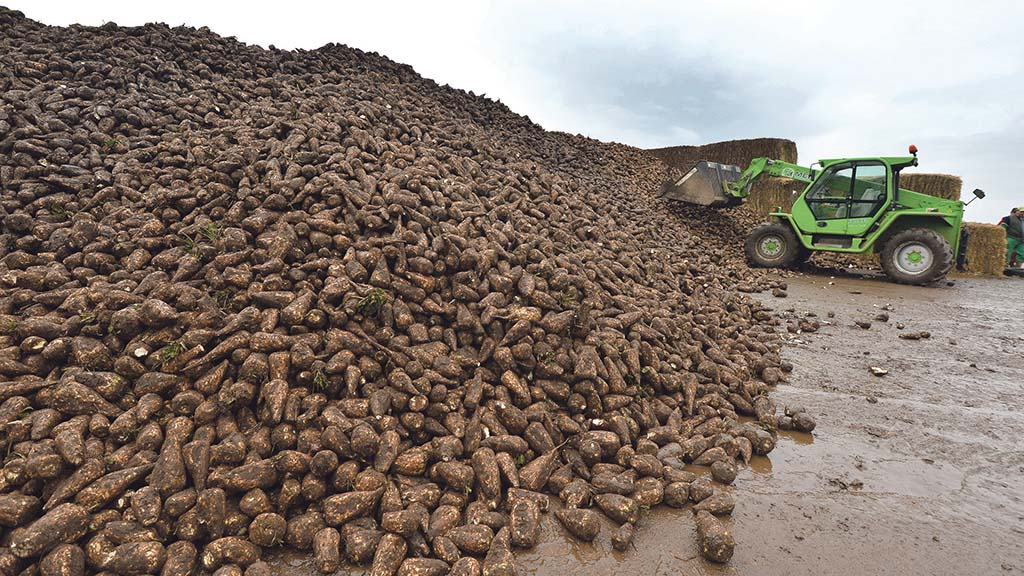 Vydate given emergency approval for use in sugar beet