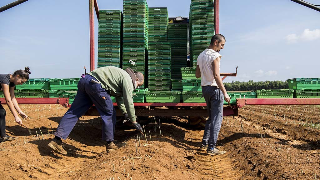 Food and drink industry call for Covid-19 visa to alleviate labour shortages