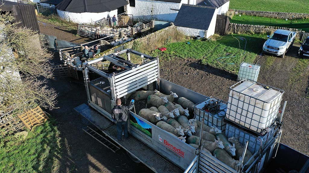 Work rates of 300 to 400 sheep per hour are achievable, says Mr Fell.