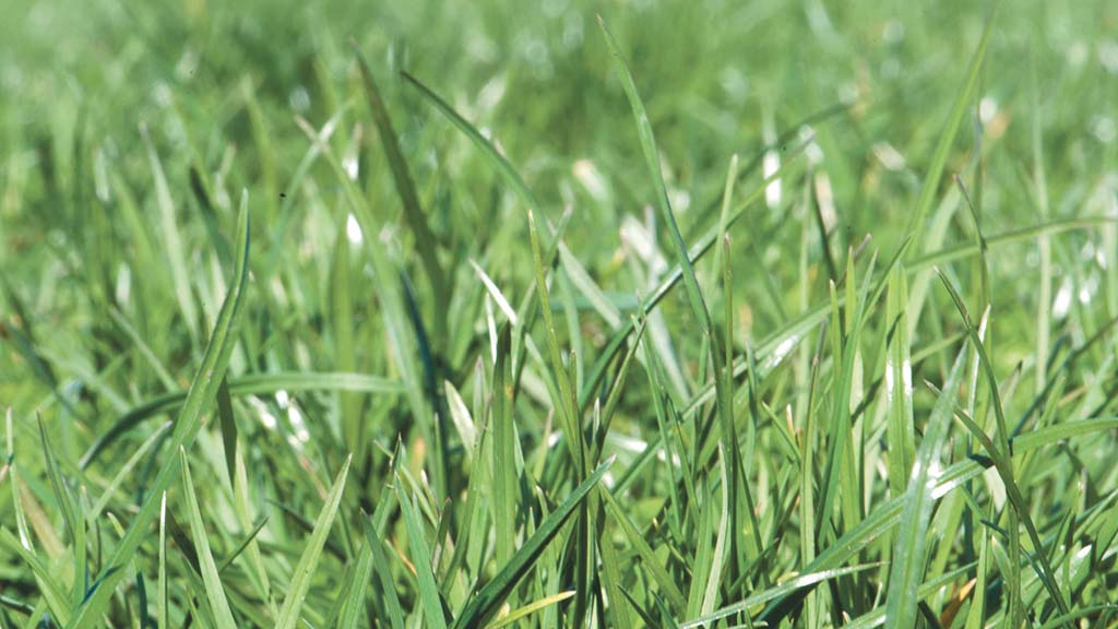 Reducing emissions from farming: Green ammonia is vital
