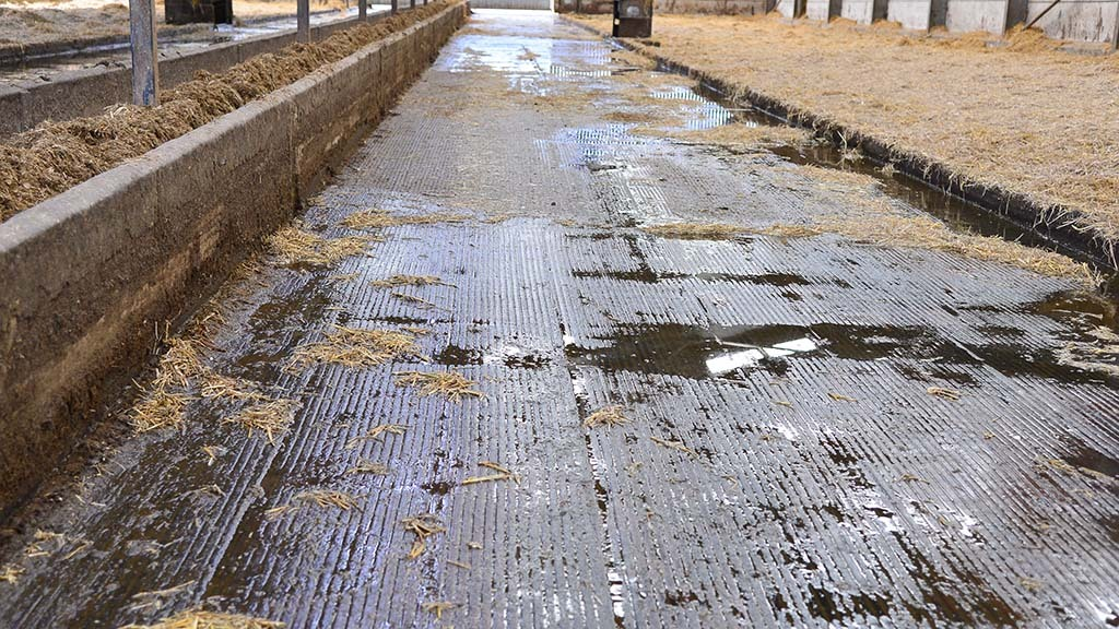Farmer finds value in concrete grooving and rubber matting investment