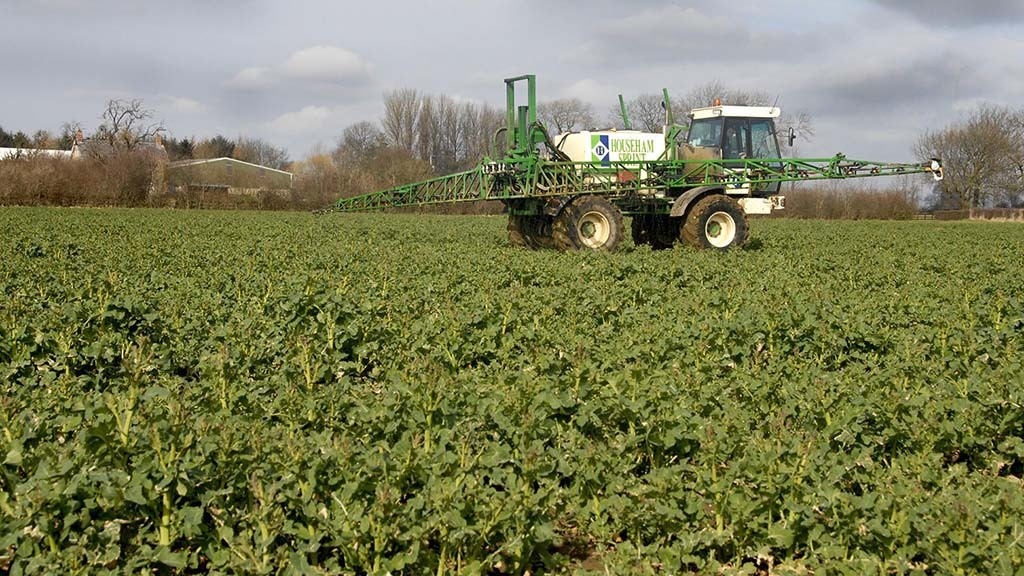 Getting on top of boron deficiency in OSR
