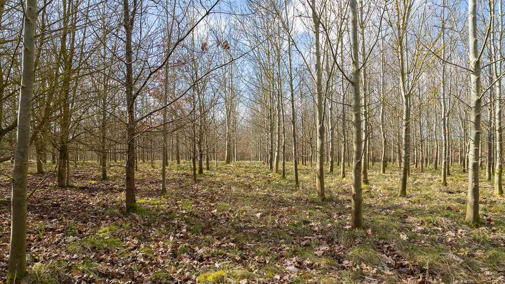 Tree planting must not be exploited by rich landowners
