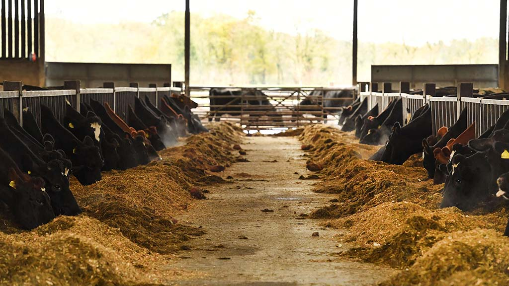 Over the last year improvements have been made to the cubicles and silage clamps.