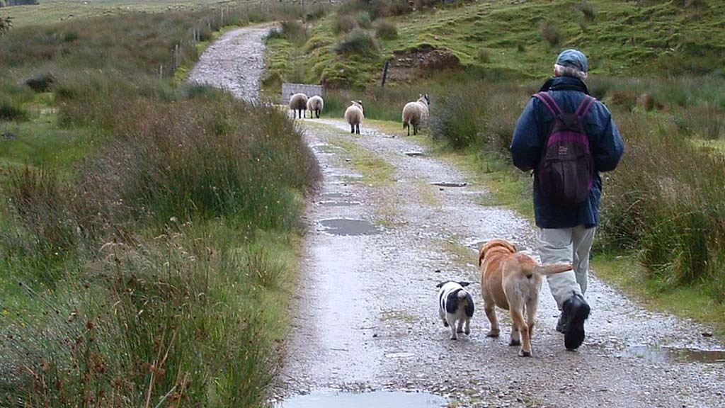 From the editor: Surge in dog ownership presents rural challenge