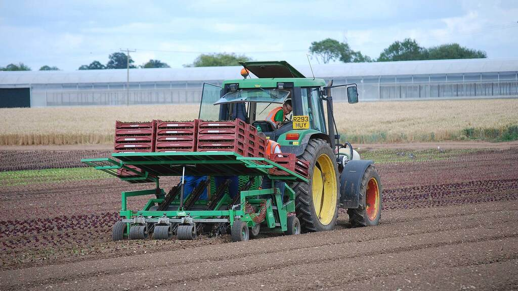 Older Massey Ferguson and John Deere tractors, which were simple to operate and easy to repair, have traditionally been favoured by Valefresco for planting and harvesting applications.