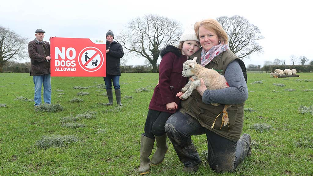 'No dogs allowed' signs prove popular among farmers