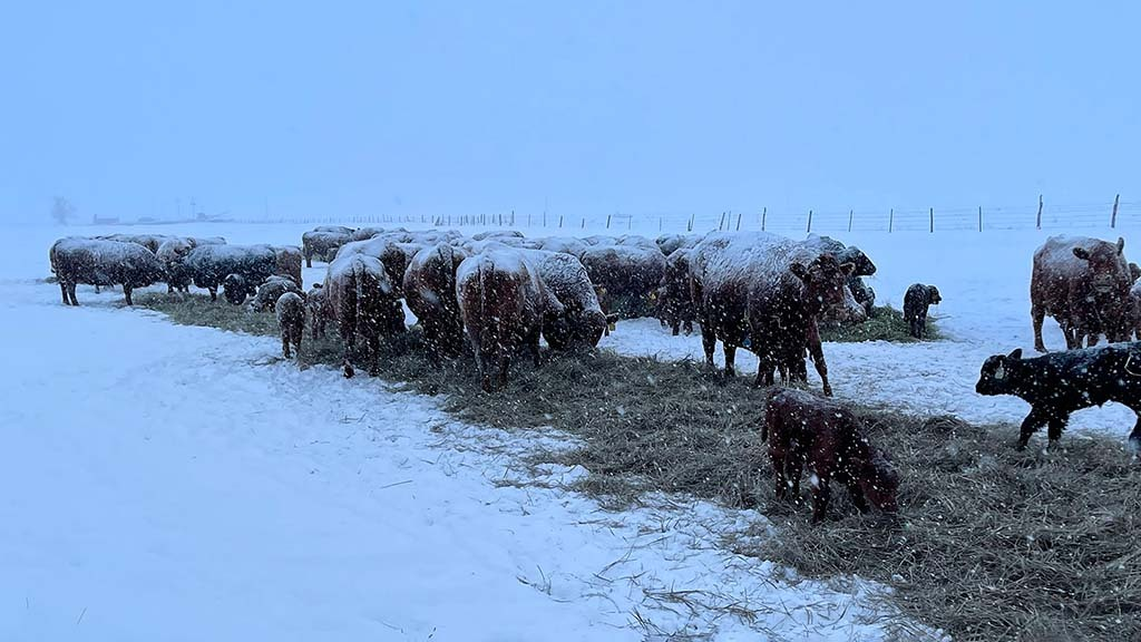 Arctic blast sees livestock freeze in Southern US