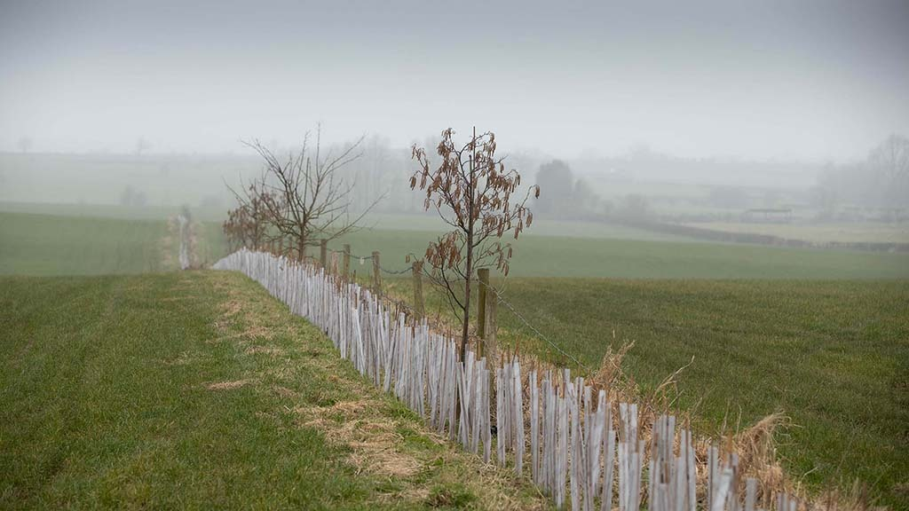 Some 9,000 hedgerow saplings are to be planted