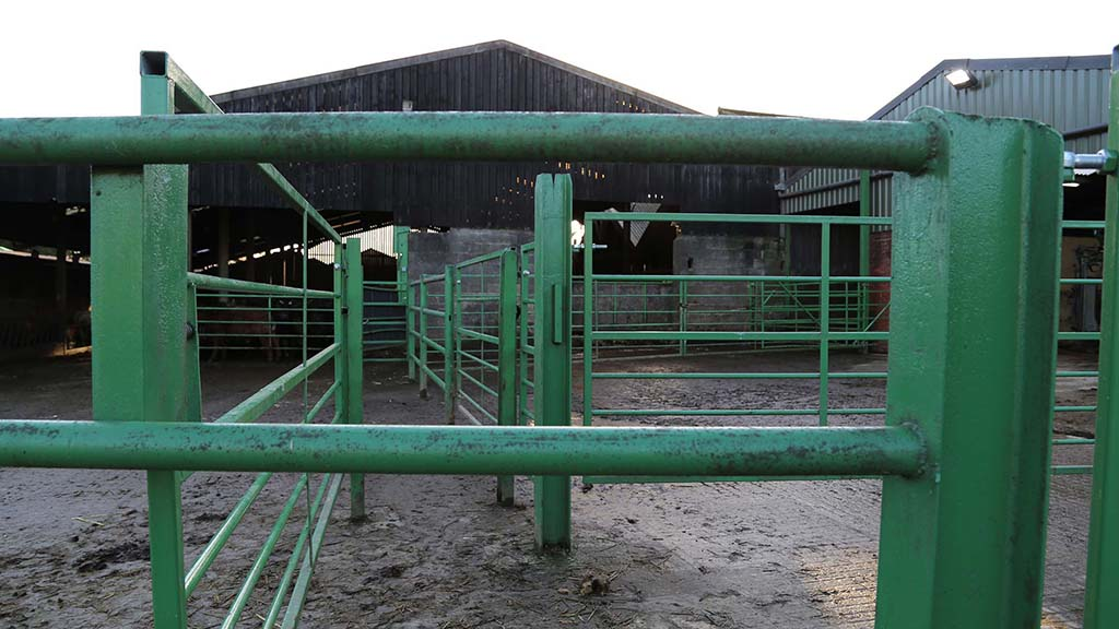 A single file passage way is used to load cattle for transport.