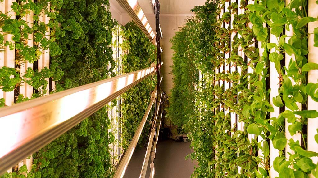 Vertical farming taking weather out of the equation