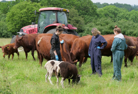 Capel Manor College - What is Agriculture and Why Should You Study It?