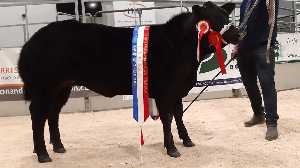 The champion from J Robertson and Co which sold for £6,000