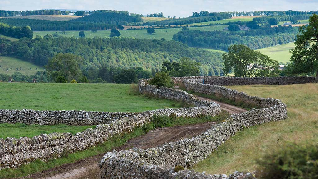 Grant Special: Countryside Stewardship will help hedge against BPS losses