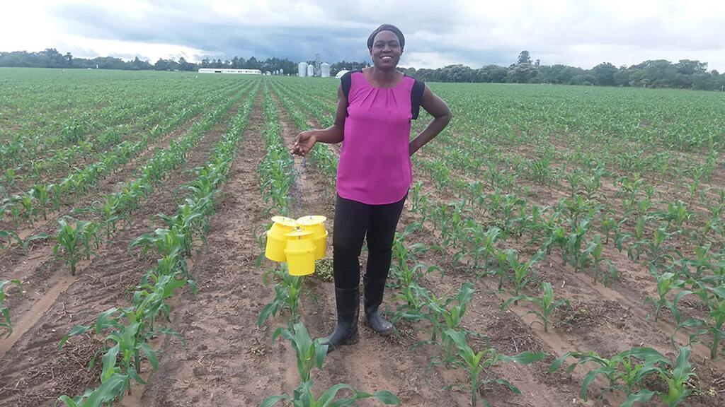 Harper Adams graduate leads fight against 'devastating' maize pest