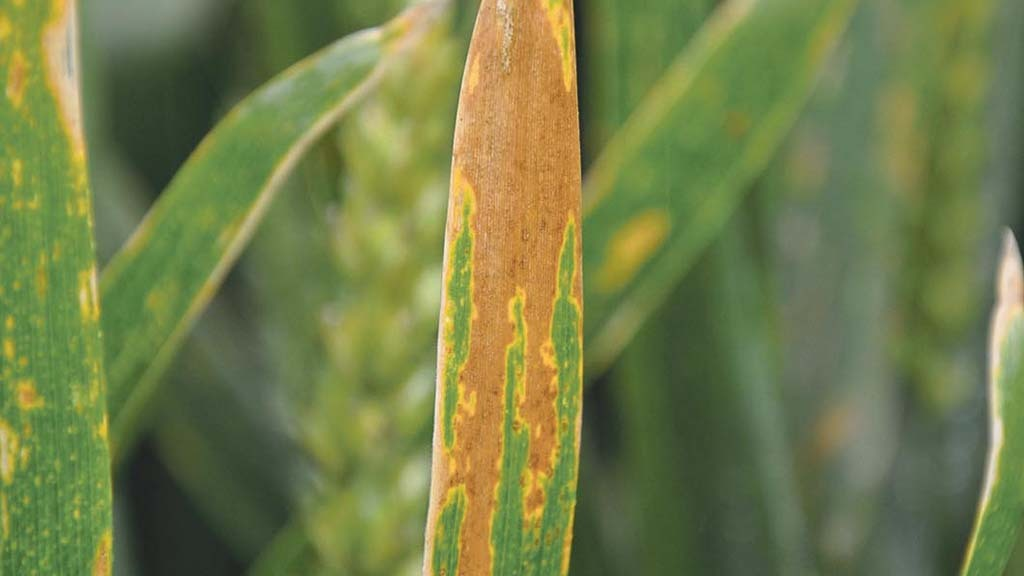 Fungicide with Inatreq active gains UK approval