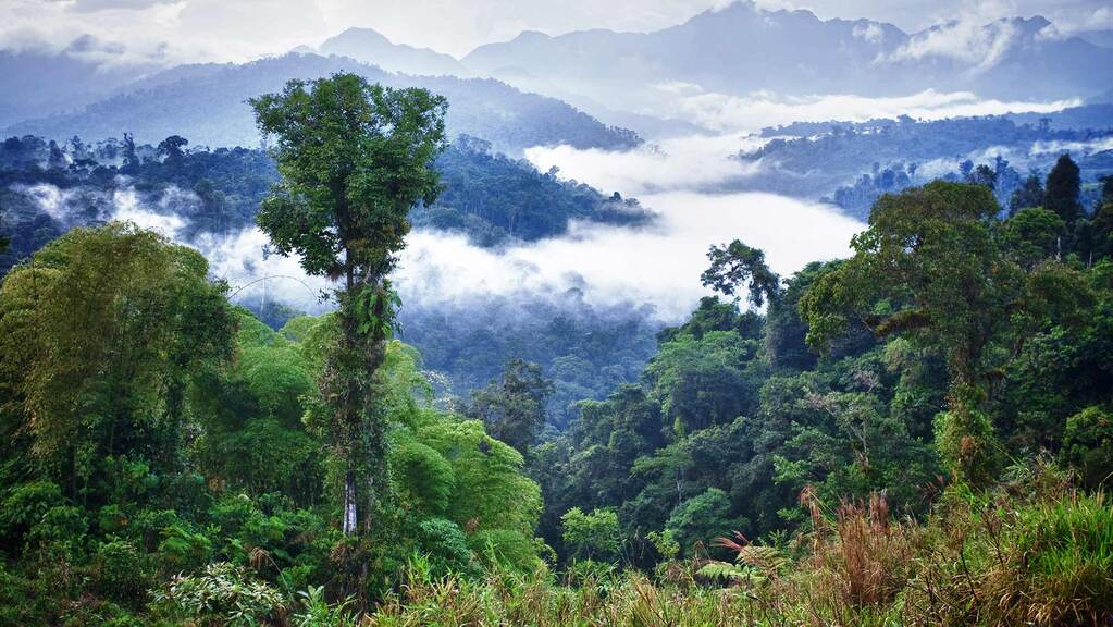 New rules to protect rainforest set to hit UK farmers with added costs and paperwork