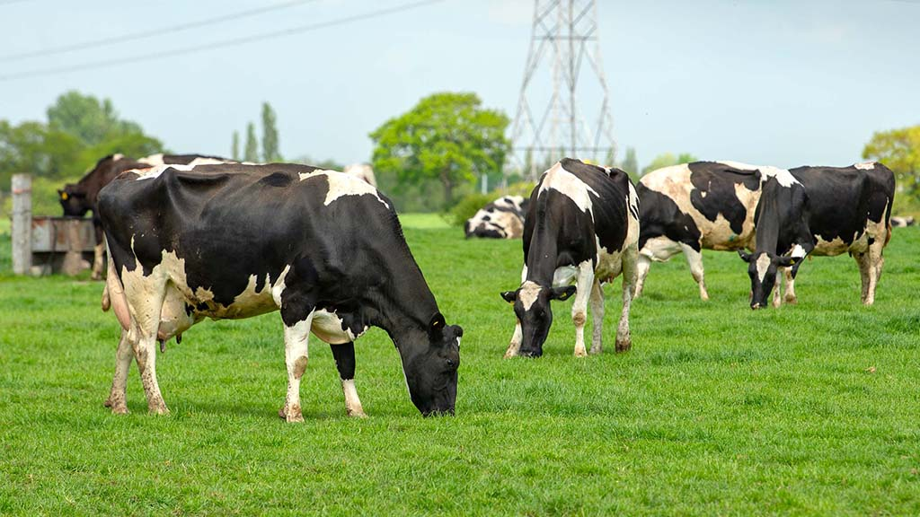 Milk market disparity sees widening gap between farmers