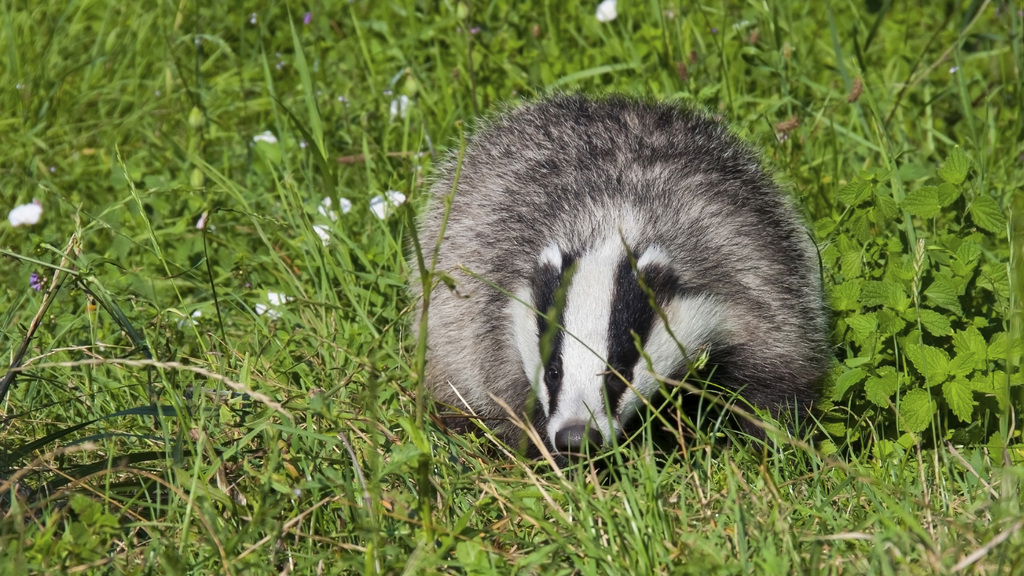 New Welsh Government must prioritise bTB eradication, says FUW