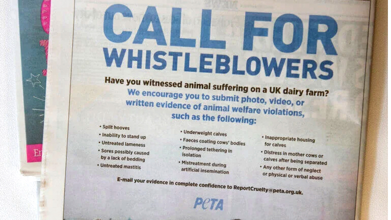Farmer anger as PETA advert calls for dairy 'whistleblowers'