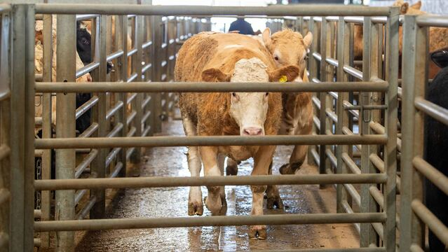 Beef prices 'exceptionally high' due to tight supply and strong retail demand