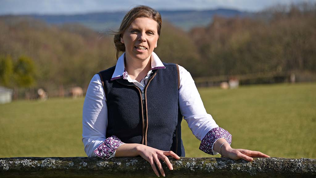 Sustainability opportunity for Welsh red meat