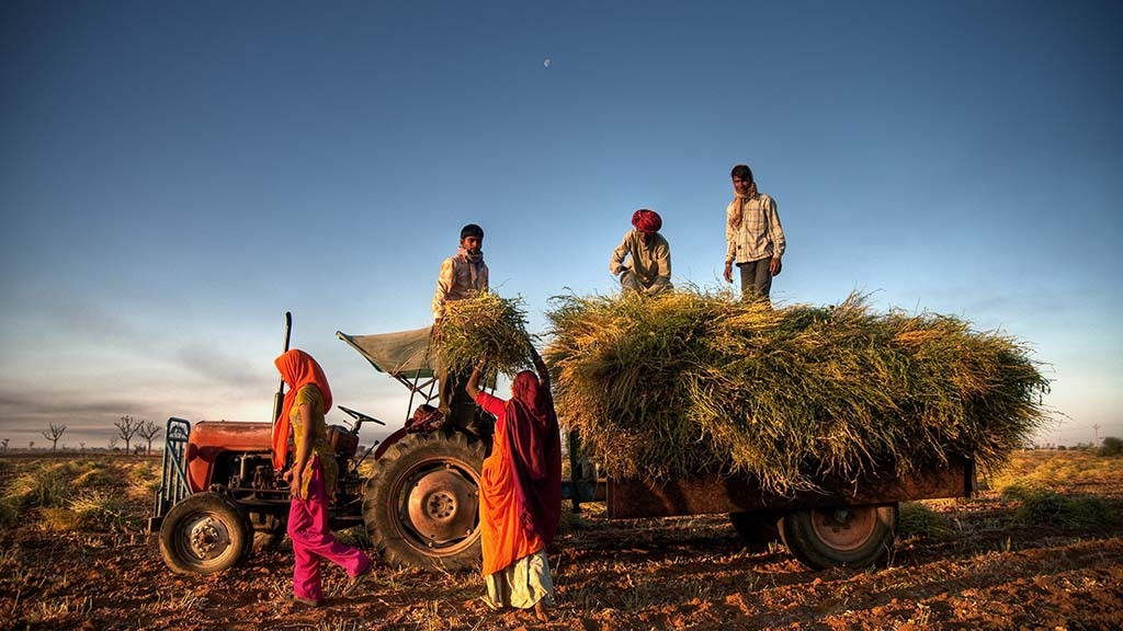 Global ag view: Spotlight on India's growing organic sector