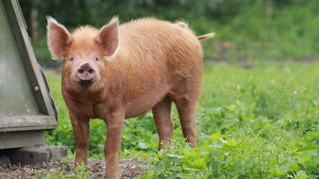 New watchlist highlights rarest UK breeds